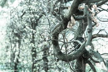 Botanicka_zahrada_NIK2224