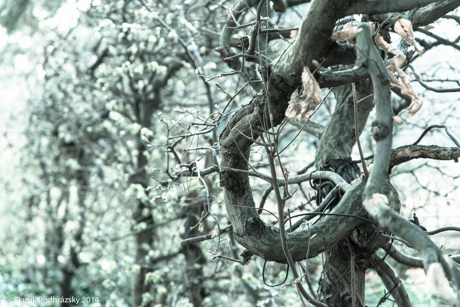 Botanická zahrada na Albertově