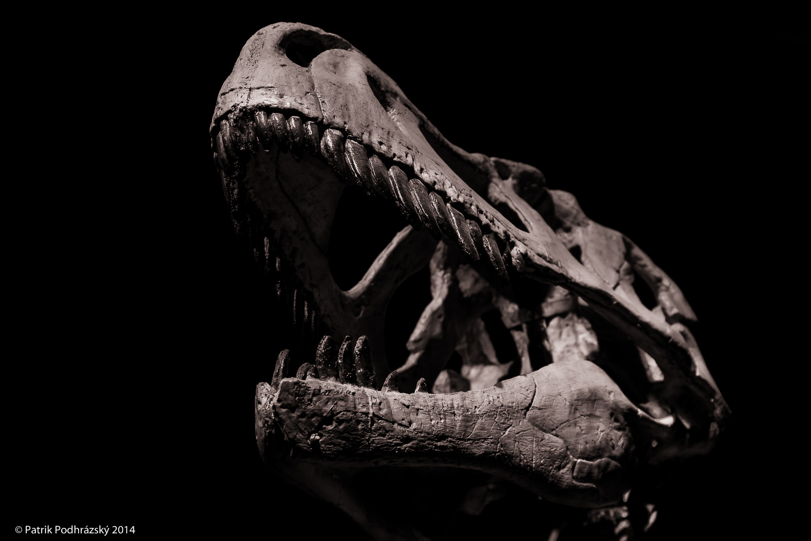 Dinosárium
