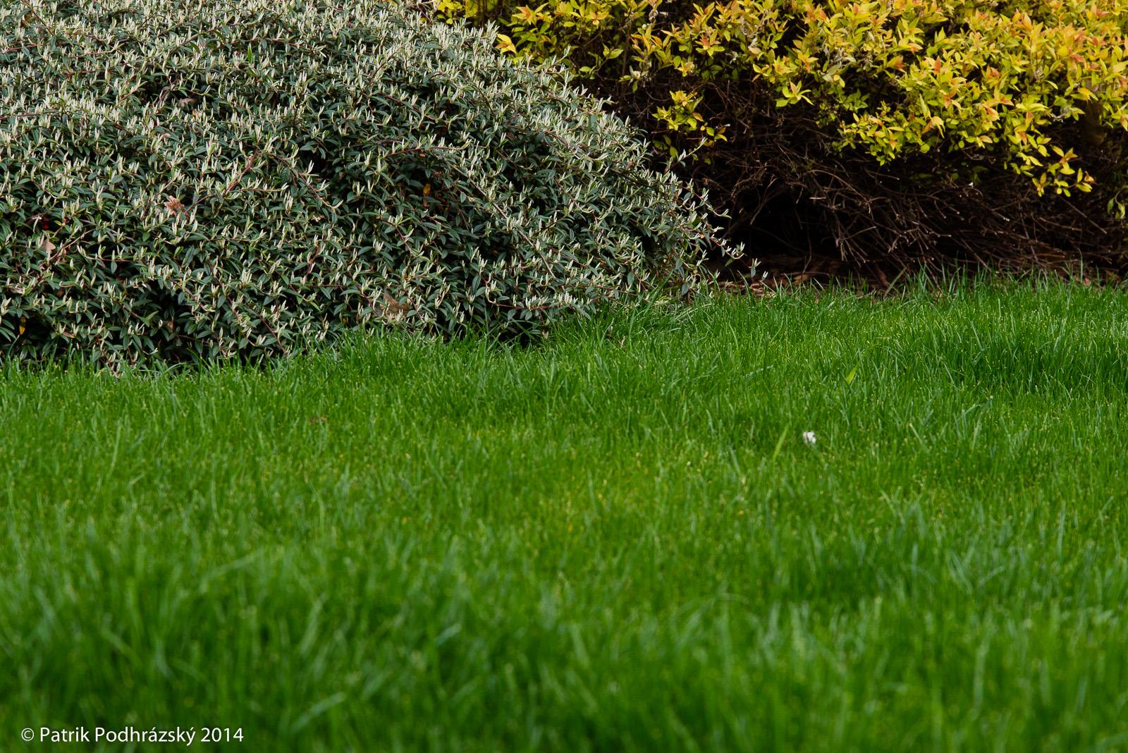 Jarní trávník