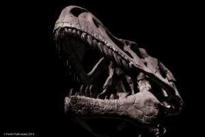 Dinosarium_NIK2842