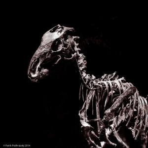 Dinosarium_NIK2850-2
